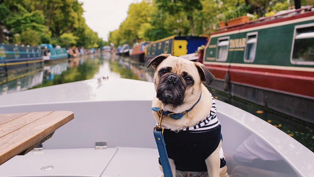honeyidressedthepug-dogblog-dogfriendlyblog-thingstodowithyourdog-boatingwithdog-dogfashionblog-petfashionblog-goboatlondon-petblogger-humanandhound-fashionandlifestyle-londonpetblogger-topdogblog-puglife-pugonaboat-boatingwithdog-londoncanals3.jpg
