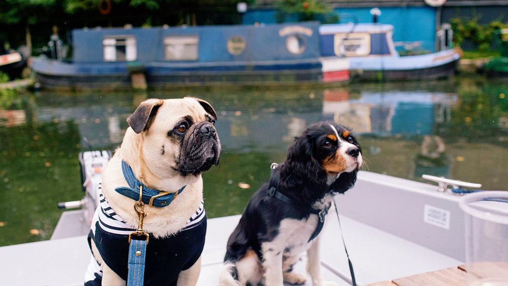 honeyidressedthepug-dogblog-dogfriendlyblog-thingstodowithyourdog-boatingwithdog-dogfashionblog-petfashionblog-goboatlondon-petblogger-humanandhound-fashionandlifestyle-londonpetblogger-topdogblog-puglife-pugonaboat-boatingwithdog-londoncanals5.jpg