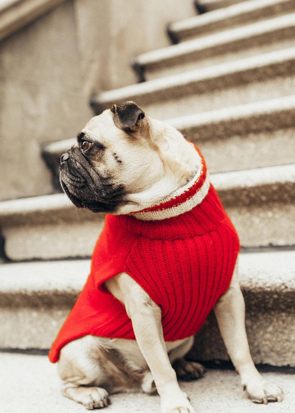 honeyidressedthepug-ariandm-dogfashionblog-petfashionblog-humanandhoundfashion-twinning-humanandhoundmatching-dogmomstyle-fordogmoms-lifetstyleblog-dogfriendlyblog-fallfashion-newyorkcity-centralpark-puginclothes-dogmodel-pugmodel-dogblog 4.jpg
