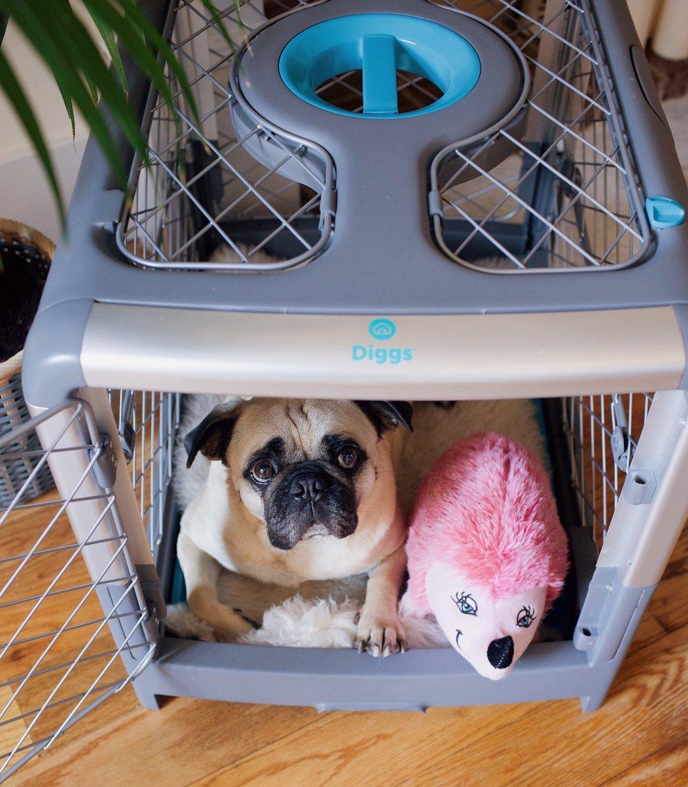 Revolcrate-coolcratefordogs-honeyidressedthepug-puglife-humanandhound-dogblog-petblogger 1.JPG
