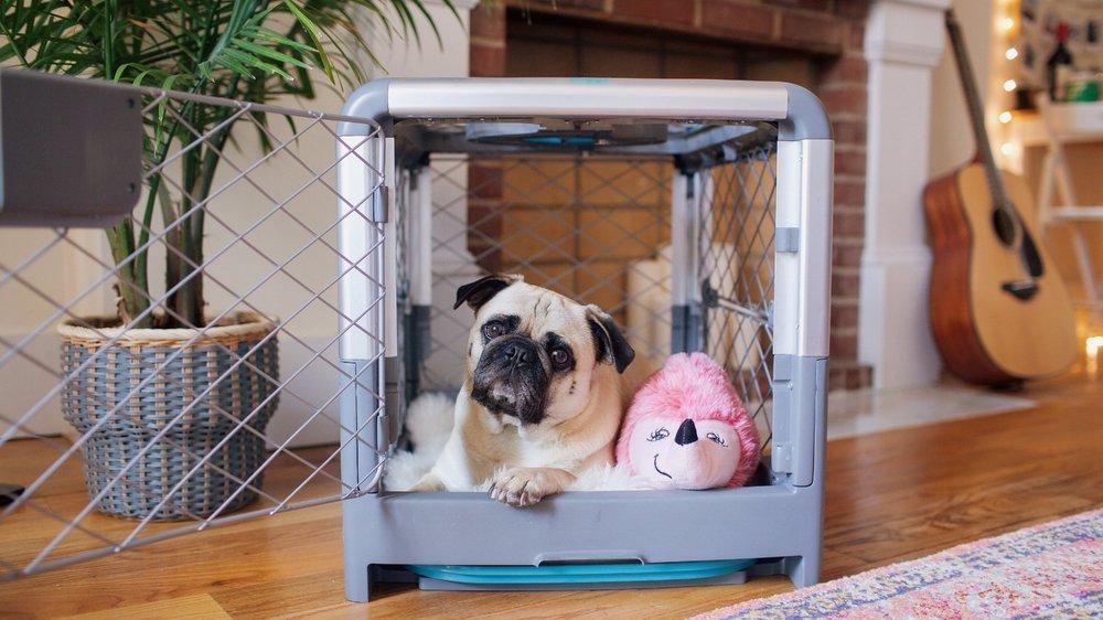 Revolcrate-coolcratefordogs-honeyidressedthepug-puglife-humanandhound-dogblog-petblogger 2.JPG