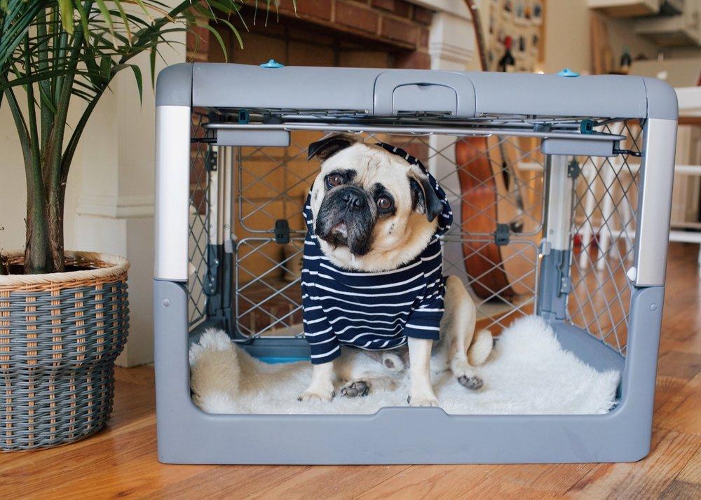 Revolcrate-coolcratefordogs-honeyidressedthepug-puglife-humanandhound-dogblog-petblogger.JPG
