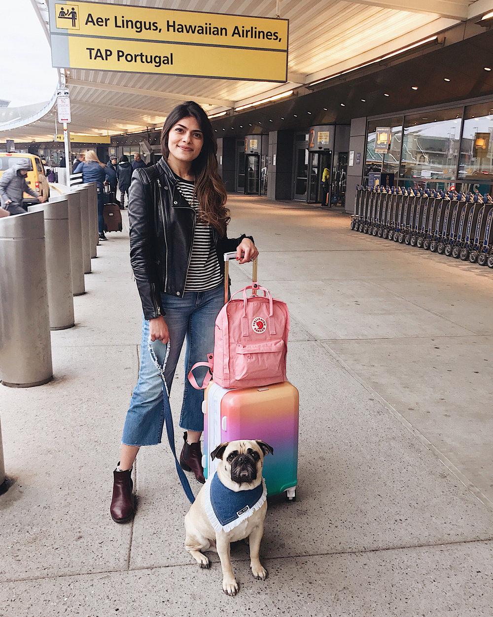 travelwithdogs-flyingwithdogs-airpotravelwithdogs-dogfriendly-travelingwithdogs-dogmom-flywithyourdog-esa-emotionalsupportnaimal-flyingwithemotionalsupport-howtofly-withyourdog-pugsonflight-dogsatairport-jetsetterdog-newyorkdog.jpg
