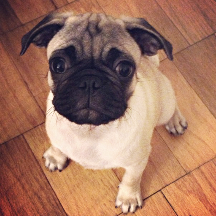 Ari puppy pic4 copy.jpg