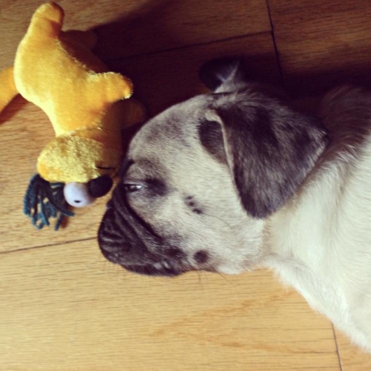 Ari puppy pic5.jpg
