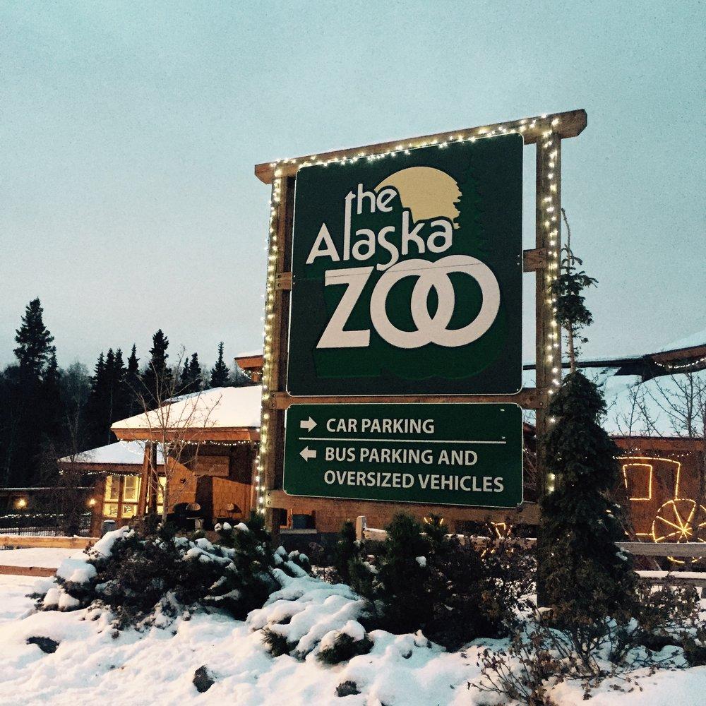 The Alaska Zoo rescues hurt animals