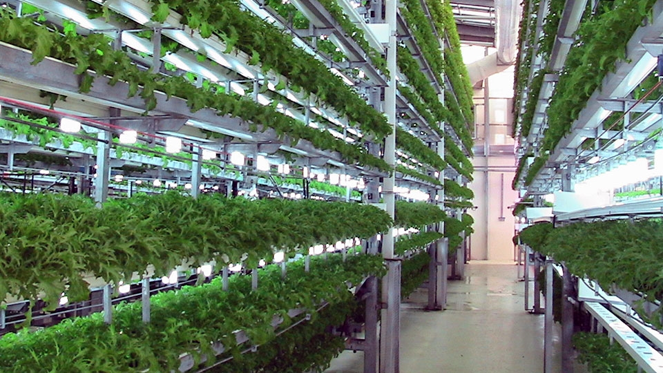 aeroponics-warehouse.jpg