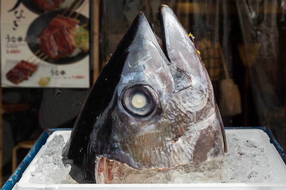 5_A_TokyoFish.jpg