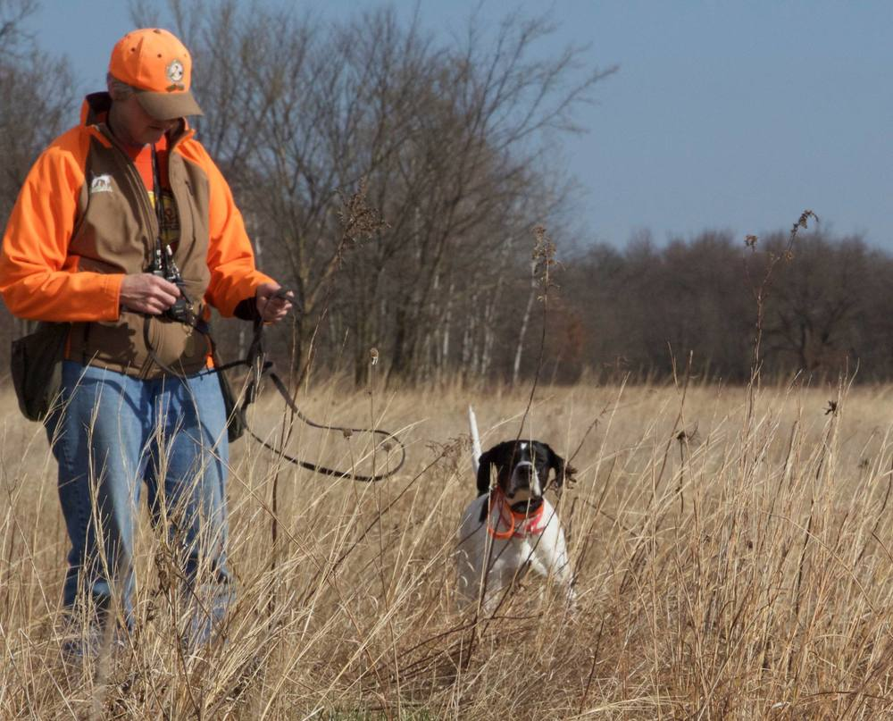 Donna and Stella (English Pointer)
