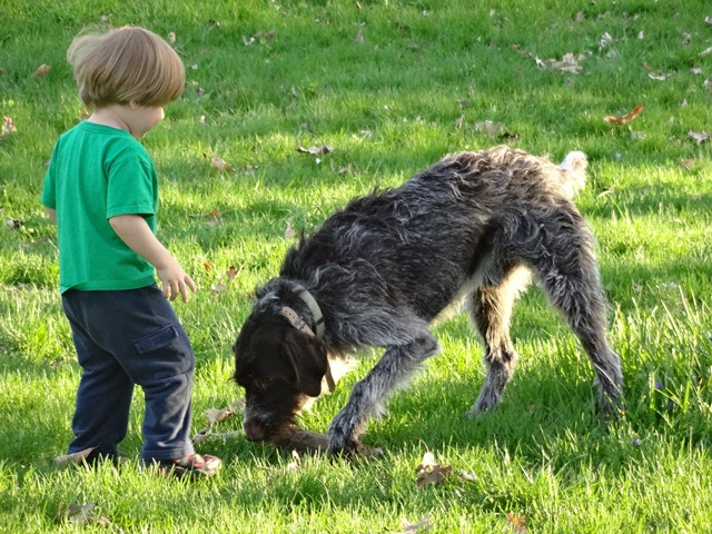 Tim Hauser's Kessler (GWP) and George (Toddler)