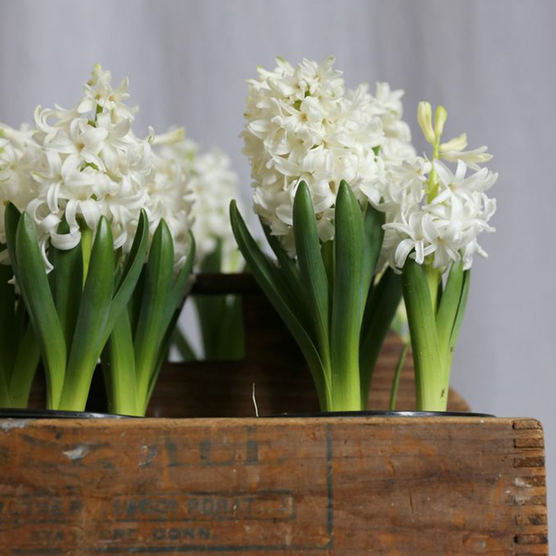 HILARY HORVATH FLOWERS- PORTLAND FLOWER DELIVERY- ALDER & CO