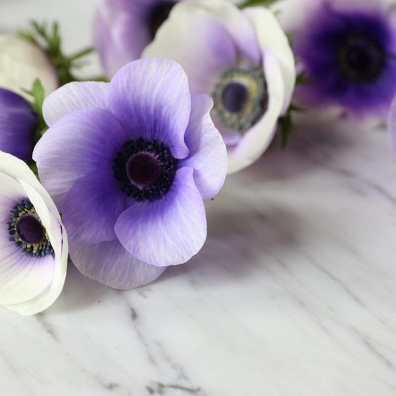 anemone_hilaryhorvathflowers_portland