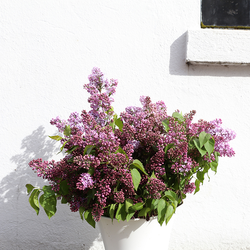 hilary_horvath_flowers_delivery_8_lilac.jpg