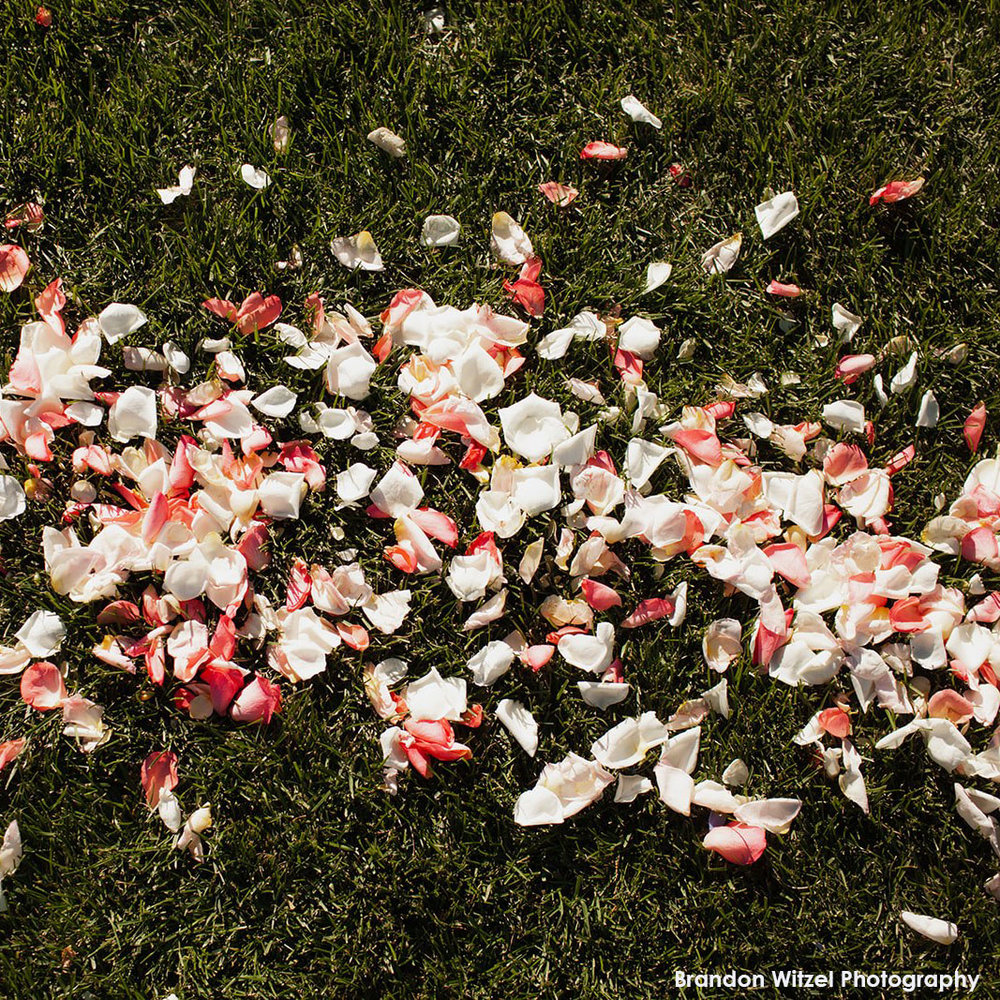 rose petals hilary horvath flowers.jpg