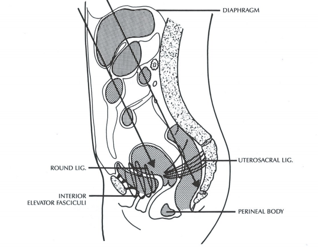 Urogenital Manipulation By Jean-Pierre Barral Published by Eastland Press, Chapter 1, pages 19-32