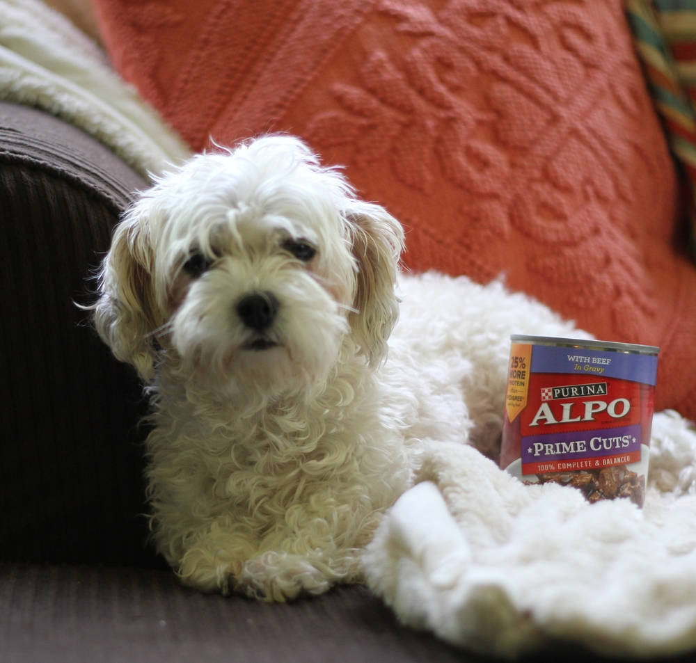 ellie gets alpo