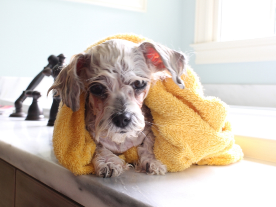 I fail to stay as cute during a bath.  I don't want to talk about it.