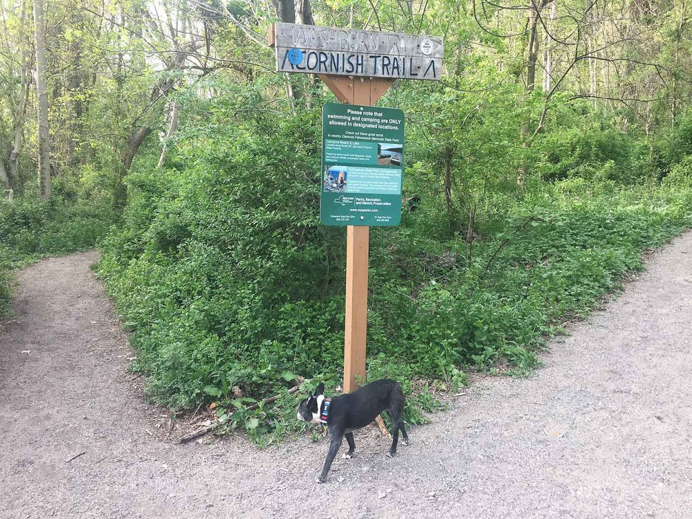 You can go left or right for this loop hike. Going right (Washburn trail) means a steeper ascent at the beginning (That's not my dog but I wish it was!)