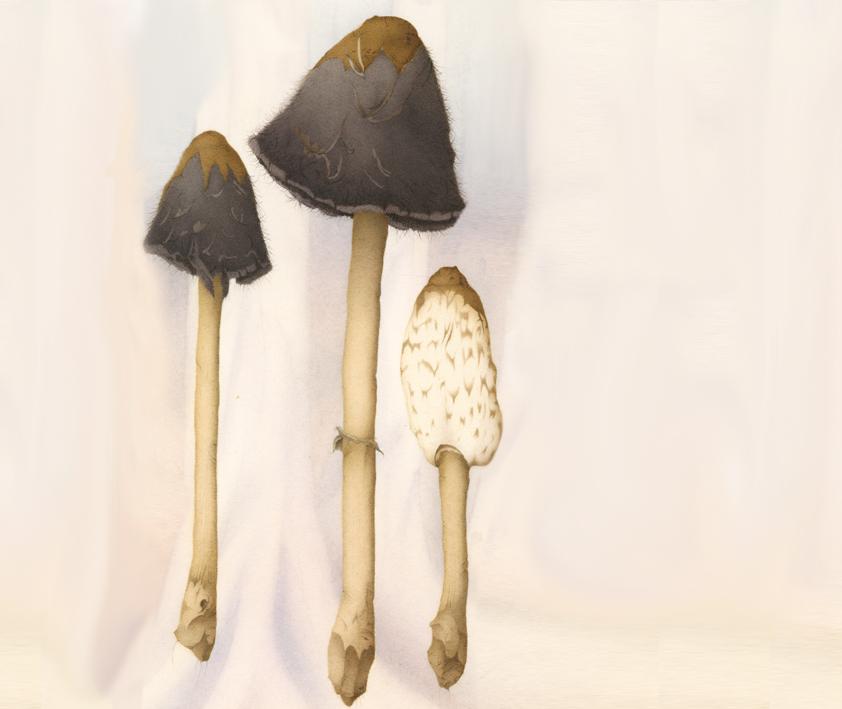 Fungi 05.jpg