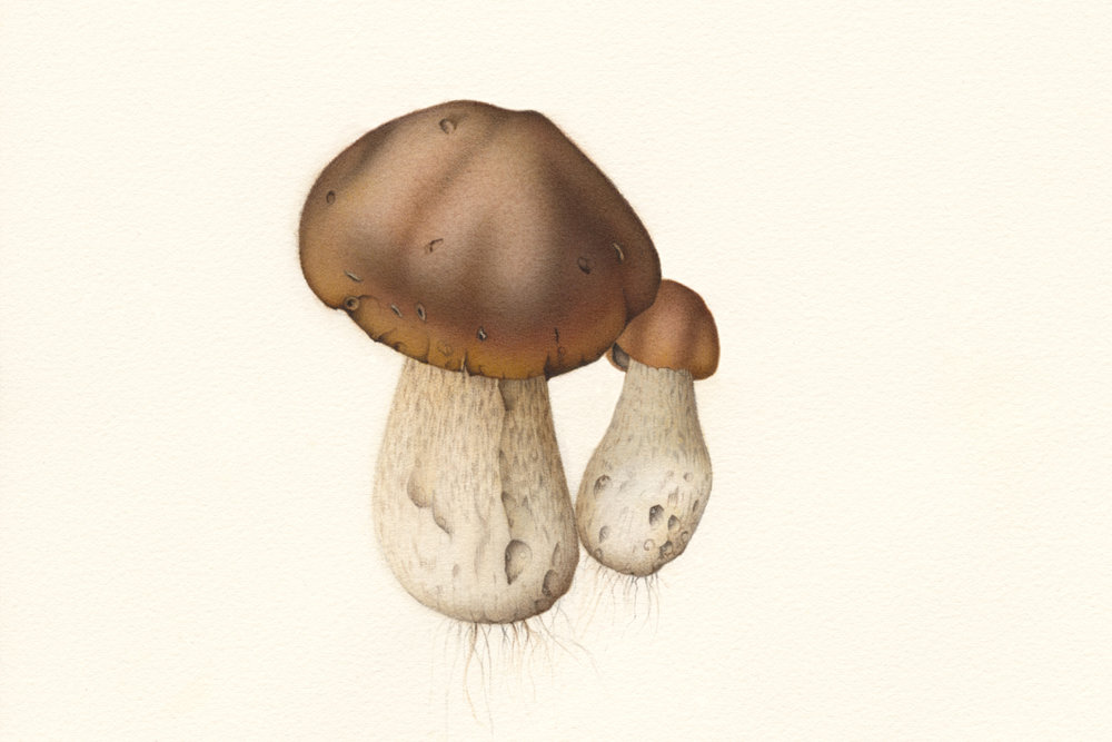 Mushroom 01.jpg