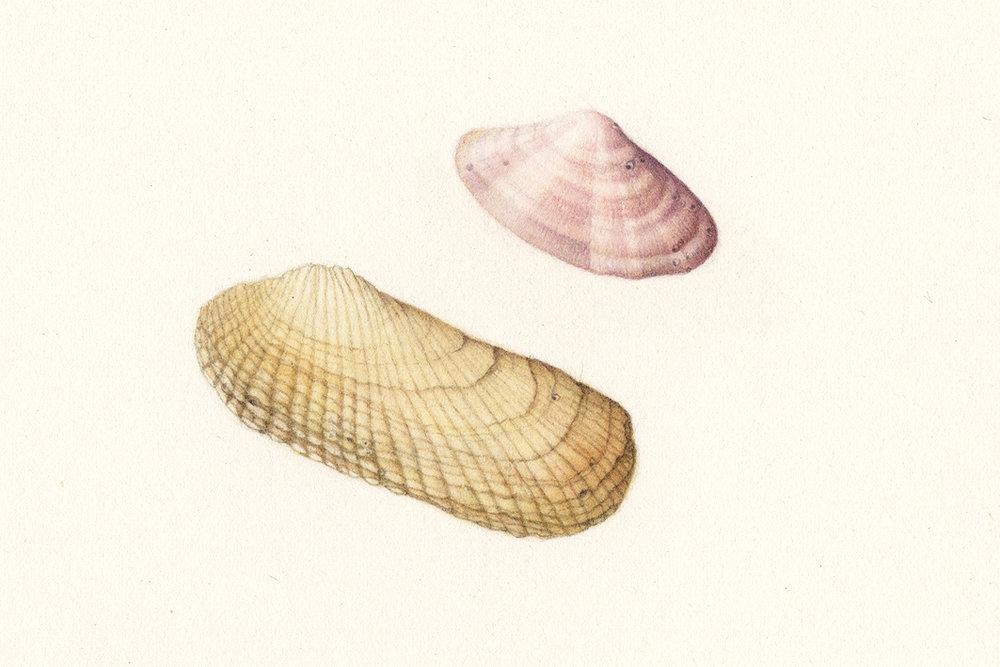 Shell 02.jpg