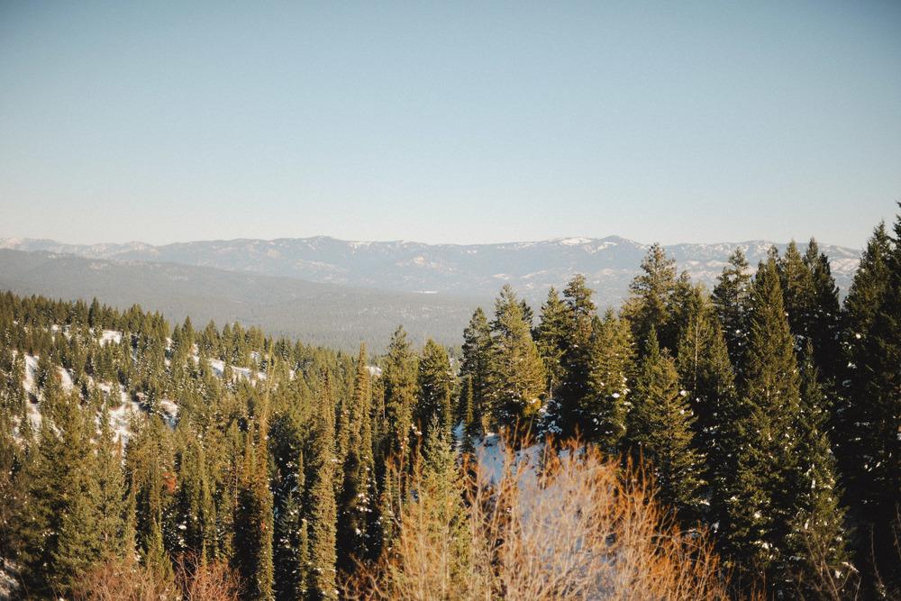 Adamson Tree Hunting 11.jpg