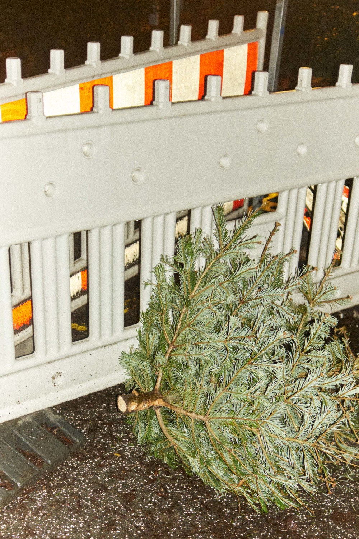 Weihnachtsbaum_15-01-12_DSF3398.jpg