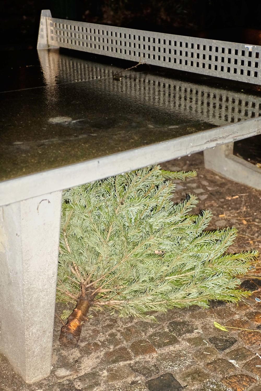 Weihnachtsbaum_15-01-12_DSF3407.jpg