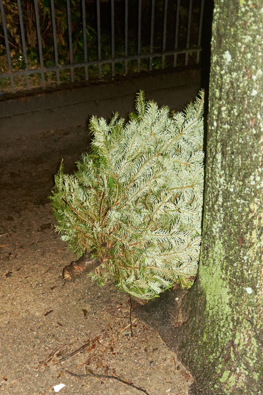 Weihnachtsbaum_15-01-12_DSF3452.jpg
