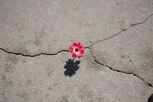 flower in concrete.jpg