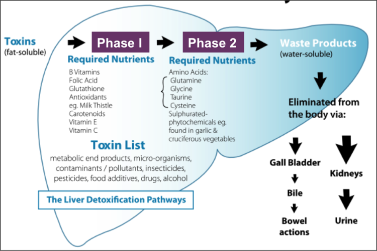 How taking out the trash impacts your health shannon werner phd lets break down the livers function using the trash analogy ccuart Gallery