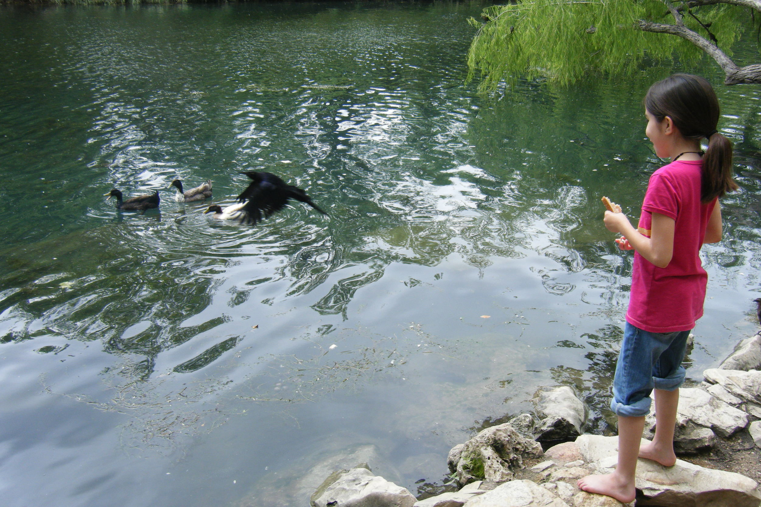 My niece feeding the ducks at Town Lake