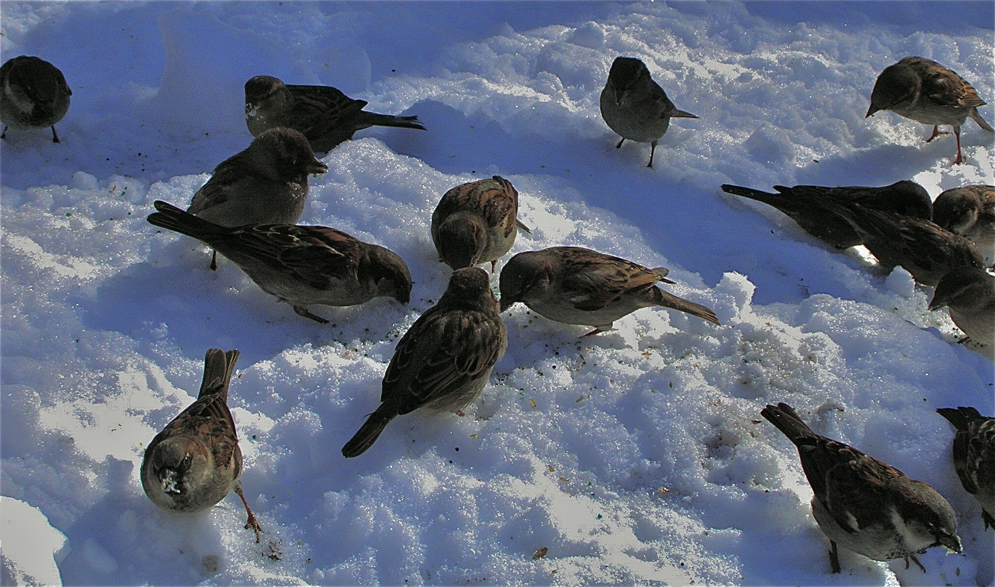 Little birds enjoying the snow in Central Park