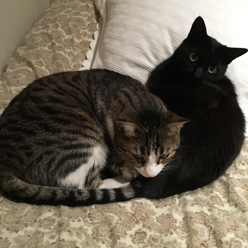 Los dos gatitos