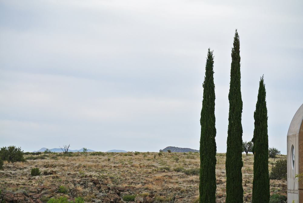Italian Juniper trees at Arcosanti  © Shannon Moore