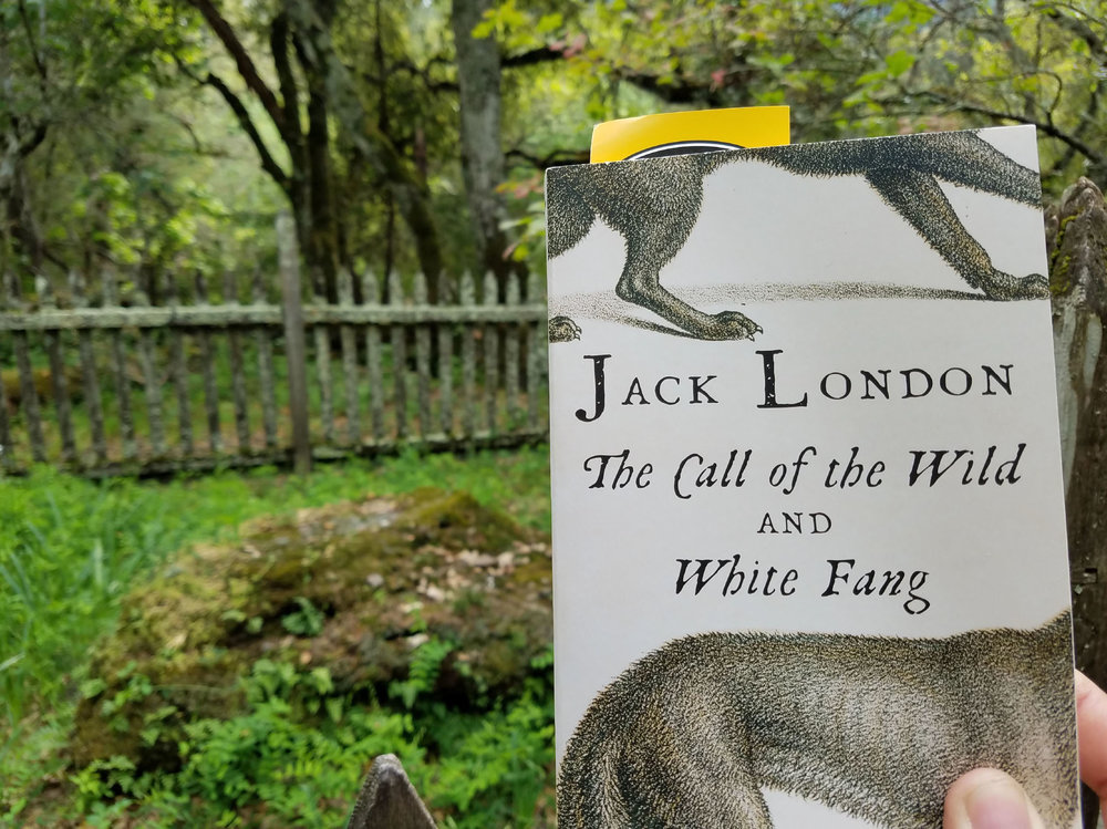 Reading Call of the Wild at Jack London's grave.