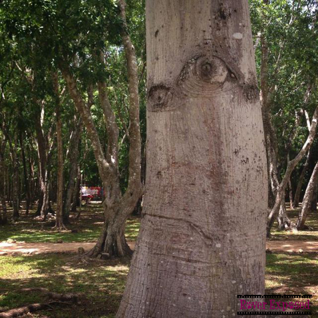 """I went to Chichen Itza once. It was awful."" – Grumpy Tree, at Chichen Itza"