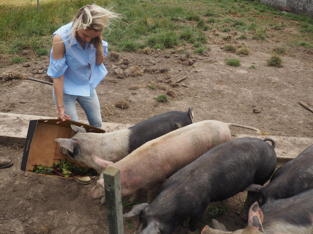 Bimbadeen4 - cat feeding pigs.JPG