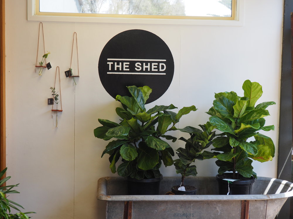 The shed a -  logo.JPG
