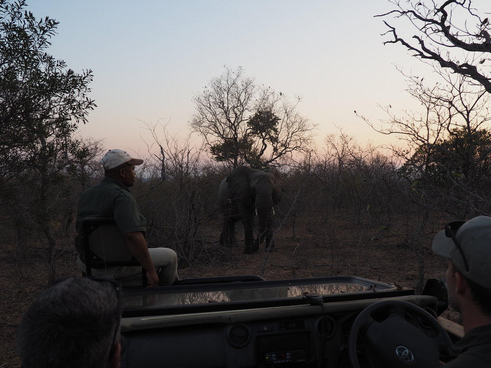 Safari elephant tracker front on.JPG