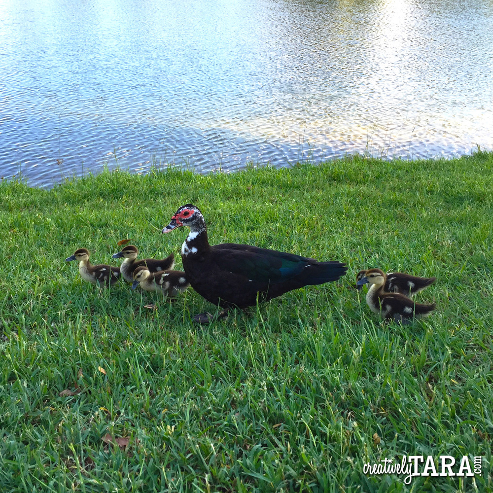 CreativelyTara_June16_Ducks.jpg