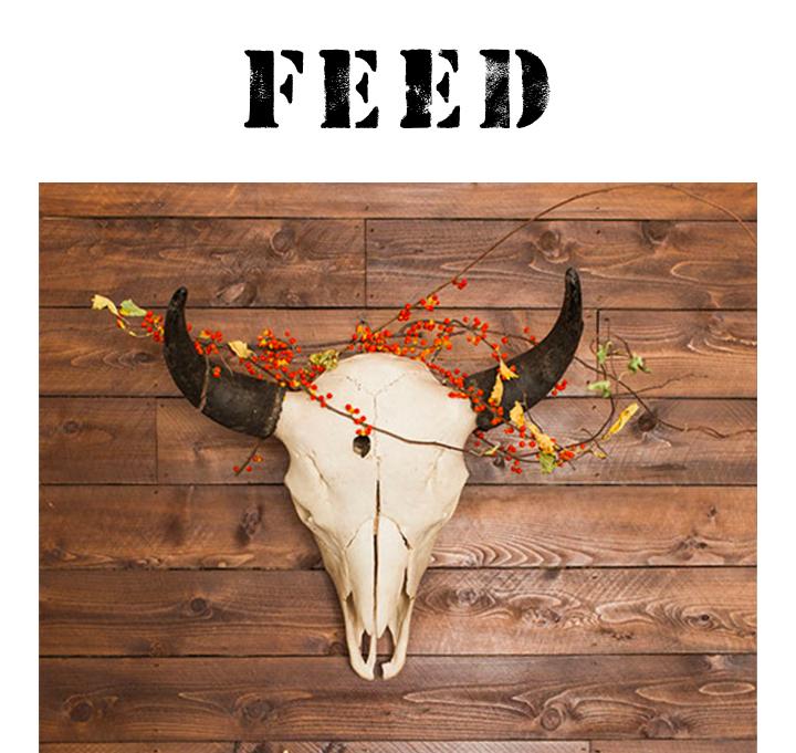 feed-casey-brodley.jpg