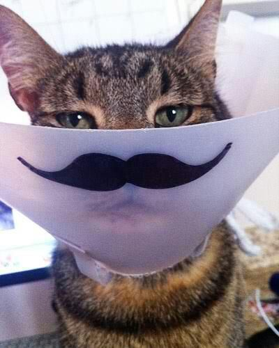 ok, sometimes mustaches make things better. touche, cat.