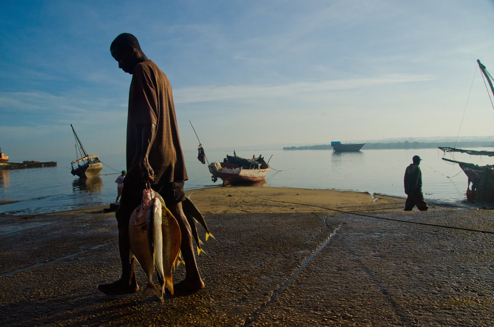 Morning Catch  Stone Town, Zanzibar 2015