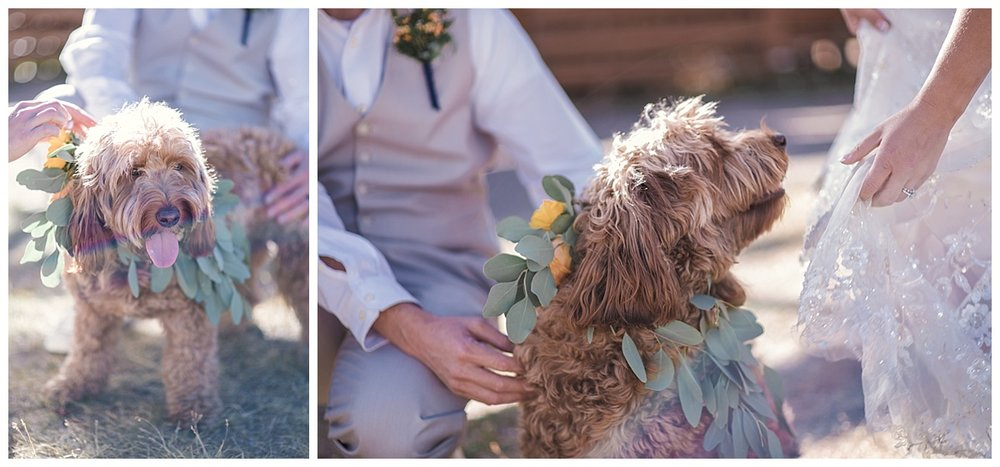 bride and groom and dog, Rocky mountain adventure elopement, colorado wedding photographer, denver wedding photographer, denver elopement photographer, colorado elopement photographer, best wedding photographer colorado, best wedding photographer denver