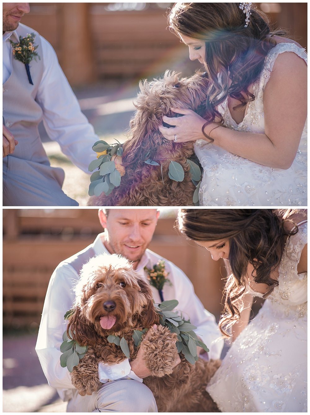 bride and groom and dog, Rocky mountain adventure elopement, colorado wedding photographer, denver wedding photographer, denver elopement photographer, colorado elopement photographer, best wedding photographer colorado, best wedding photographer denver, winter park wedding