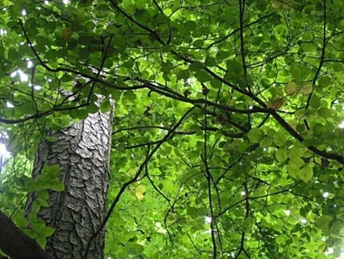 bigstock_Stn_Mtn_Sun_Trees_983155.jpg