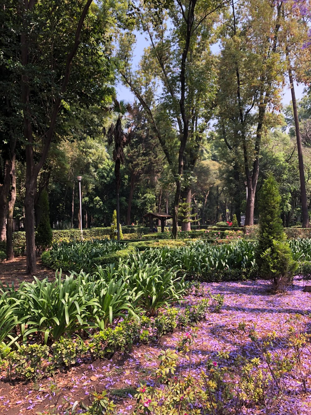 Parque Mexico in Condesa. This was a 5 minute walk from our Airbnb.
