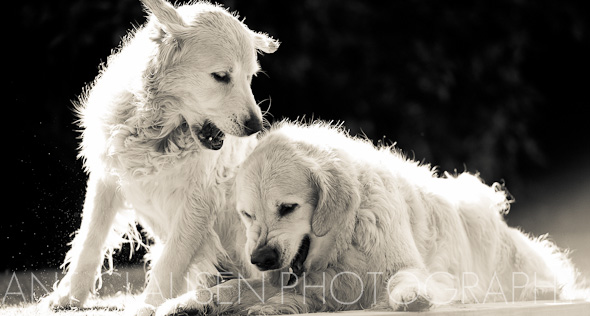photo of dogs portraits new zealand