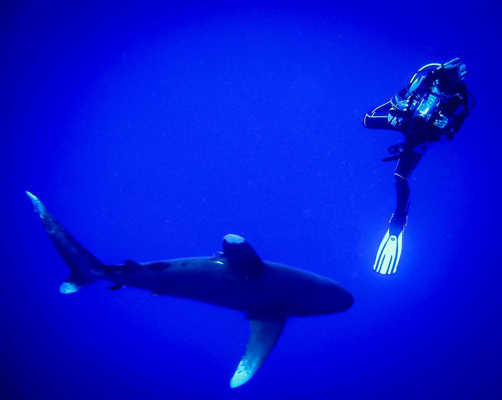 natalia_shark-1.jpg